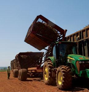 Trator puxa transbordos em plantação de cana