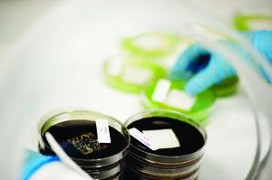 Teste de resistência a fungos e algas
