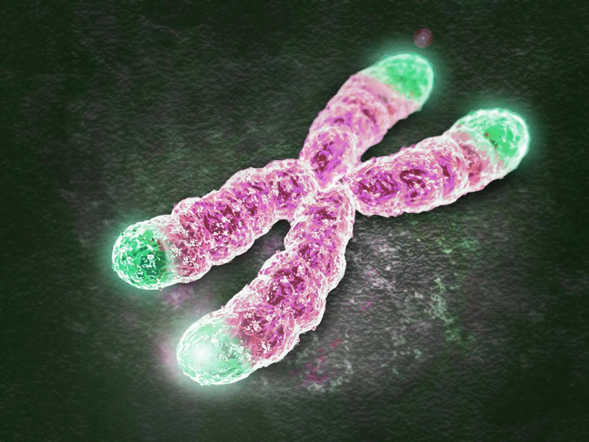 O segredo antienvelhecimento: Cuide dos seus telômeros e mitocôndrias