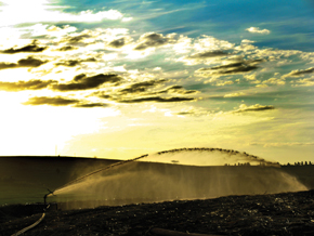 Lavoura de cana-de-açúcar é irrigada e fertilizada com a vinhaça, em fazenda no Paraná