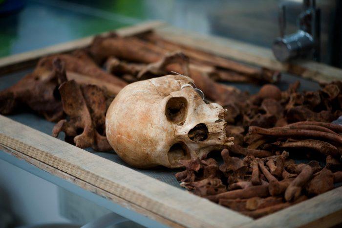 Esqueletos são retirados das caixas para lavagem, classificação e documentação de características específicas
