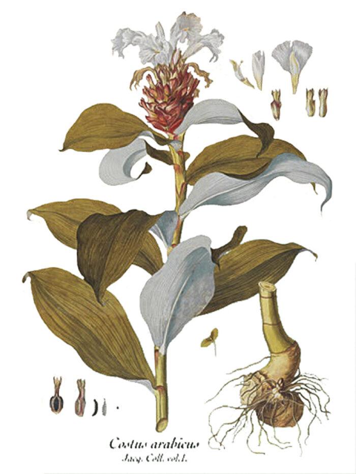 550.000 muestras de plantas, la mayor colección botánica del país