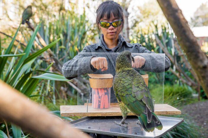 Sem ver o que a pesquisadora retirou dos potes, papagaio precisa escolher uma das mãos