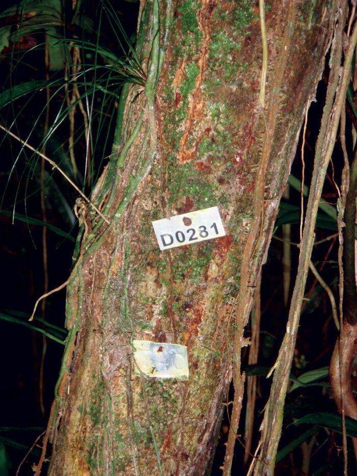 Três ações de campo do programa na Mata Atlântica: placa de identificação colocada em árvore,